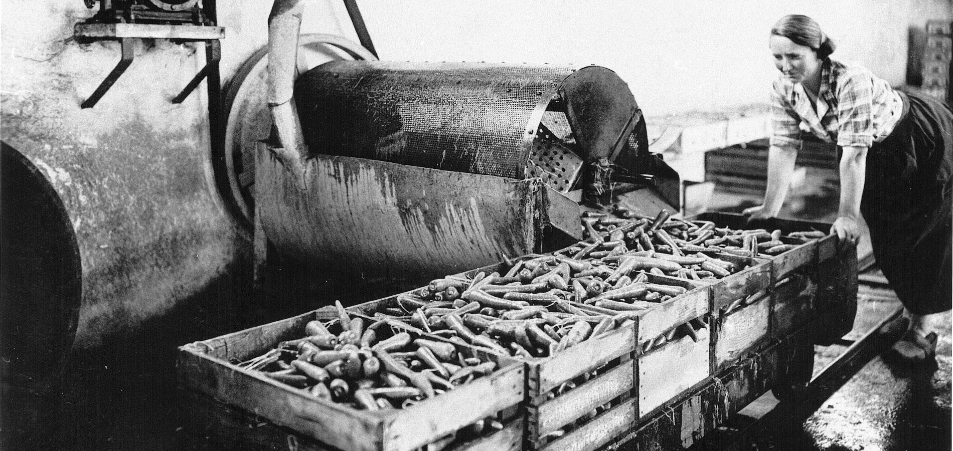 Lavage carotte 1937